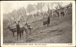 The Deer Family, Forest Park