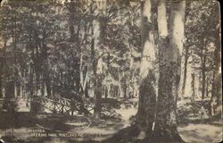 The Initial Beeches, Deering Park Postcard