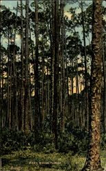 Piney Woods Postcard