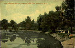 The Weeping Willows, Downing Park Lake