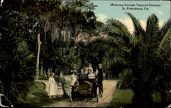 Motoring Through Tropical Scenery Postcard