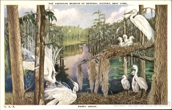 Egret Group Birds