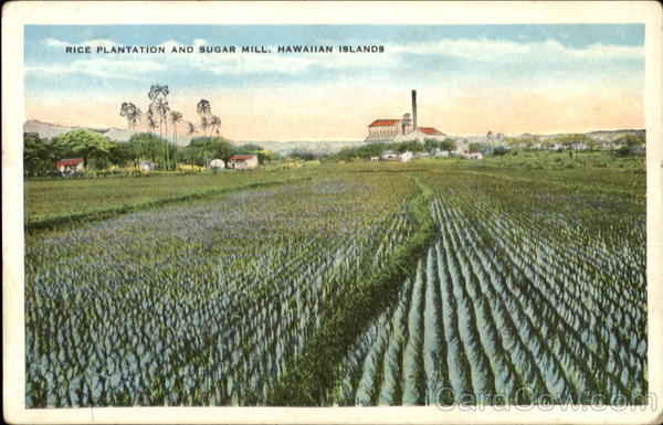 Rice Plantation And Sugar Mill, Hawaiian Islands
