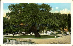 Old Oak Tree, Magnolia Cemetery Postcard