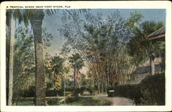 Tropical Scene Near Fort Myers