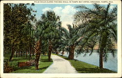 Palm Walk Along The Sea-Wall In Tampa Bay Hotel Grounds