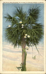 The Palm Tree Entwined With Night Blooming Cereus