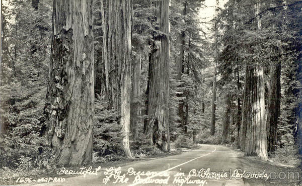 The Redwood Highway California