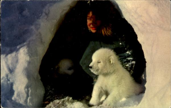 Eskimo Boy Dogs