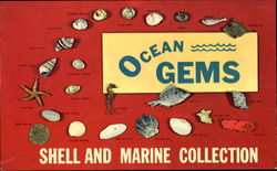 Ocean Gems Shell And Marine Collection