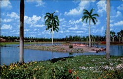 Flamingo Island At South End Of Infield Lake At Hialeah Race Course