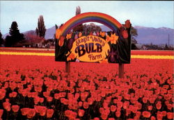 Skagit Valley Bulb Farm