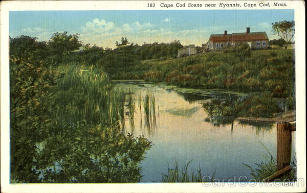 Cape Cod Scene Near Hyannis Massachusetts