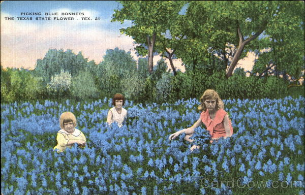 Picking Blue Bonnets Texas Flowers