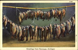 Greetings From Newaygo Postcard