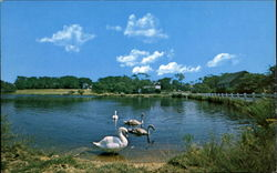 Swan Pond, Edgartown Road