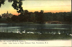Lake Scene In Roger Williams Park