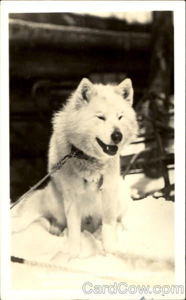 Ed. Clark's Eskimo Sled Dog Woodstock New Hampshire