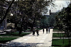 Locust Walk University Of Pennsylvania