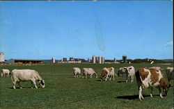 Cattle Barns, The Pennsylvania State University Postcard
