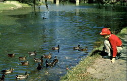 Feeding Ducks At Little Lehigh Creek, Lehigh County