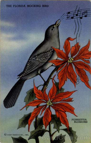 The Florida Mocking Bird and Poinsettia Blossoms Birds