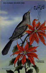 The Florida Mocking Bird and Poinsettia Blossoms
