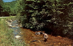 Angling In The Smokies