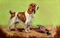 The Cocker Spaniel