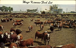 Huge Kansas Feed Lot