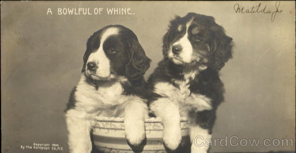 A Bowlful Of Whine Dogs