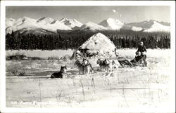 Arctic Express Dogsled Team