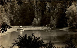 Lake Scene at Bohemian Grove