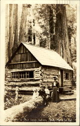 Cabin In Muir Woods National Park