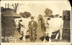 The Lange Oxen At Standish