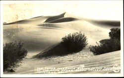 The Fated Mesquite Bushes In The Path Of The Sand Dunes, Death Valley