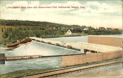 The Cotton Mills Dam And Government Fish Hatcheries Postcard