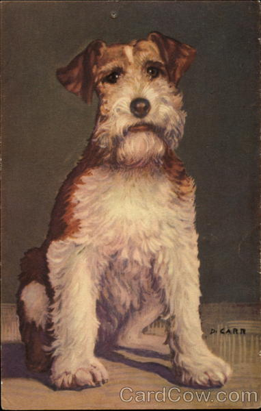 Wire Haired Fox Terrier D. Carr Dogs