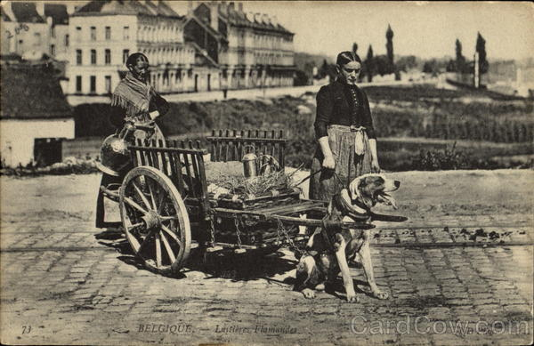 Belgique Dog Cart Dogs