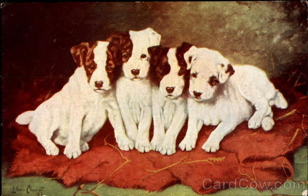 Puppies Lillian Cheviot Dogs