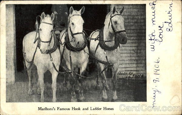 Marlboro's Famous Hook And Ladder Horses