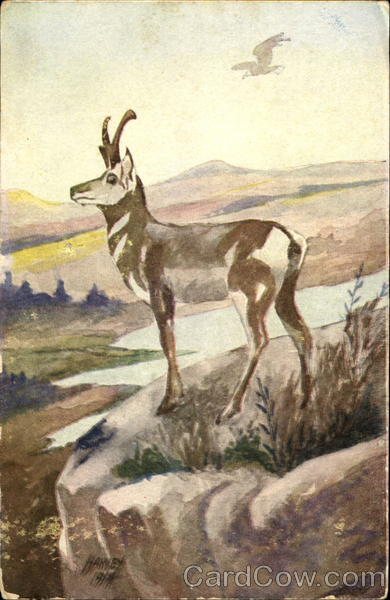 Antelope - Postcard Advertising Harvey