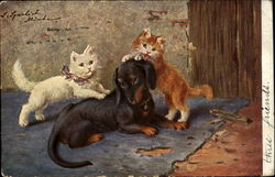 Daschund and Cats