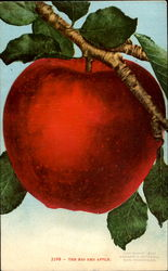 The Big Red Apple Postcard