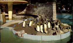 Penguins In Stanley Park