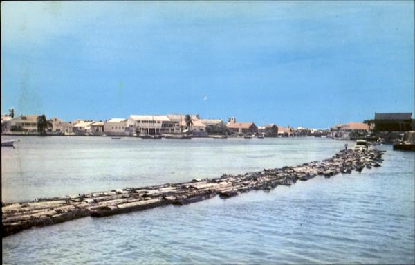 Mahogany Logs On Their Way Belize City Central America