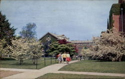 Campus In Spring, The University of Connecticut