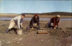 Digging For Maine Steamer Clams