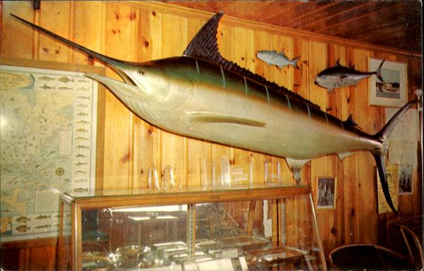 One Of The Largest Marlin Caught Off Ocean City Maryland