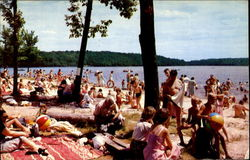 Picnic Grounds Postcard